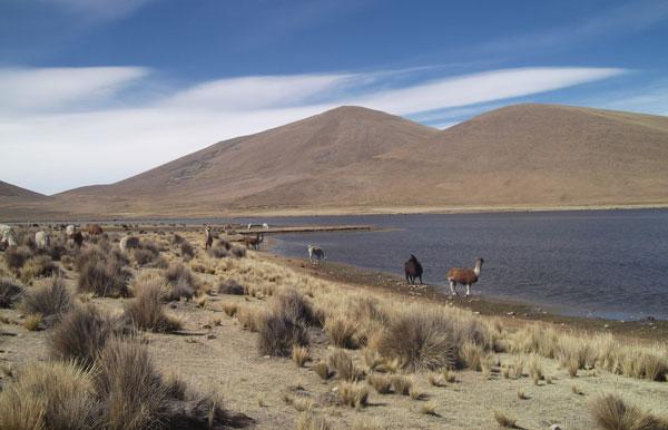 Iniciativas productivas sostenibles, para mejorar los ingresos económicos y la seguridad alimentaria en comunidades del área rural en el sur de Bolivia